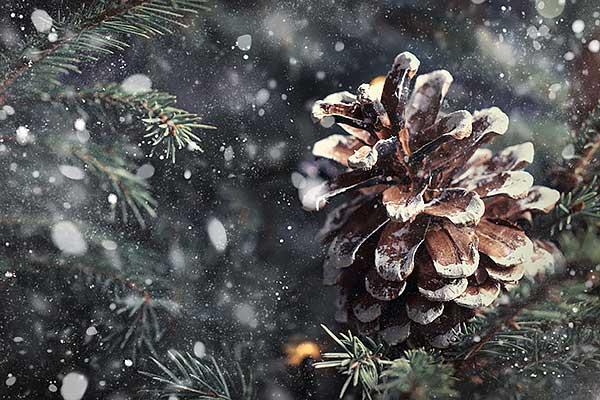Joulun odotus